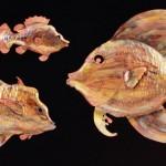 3fish-lg