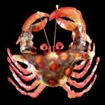 crab1-lg