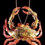 crab2-lg