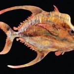 fish3-lg
